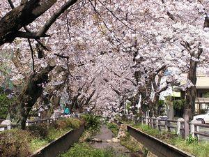 SNsakurafukasawa_4_070402[1].jpg